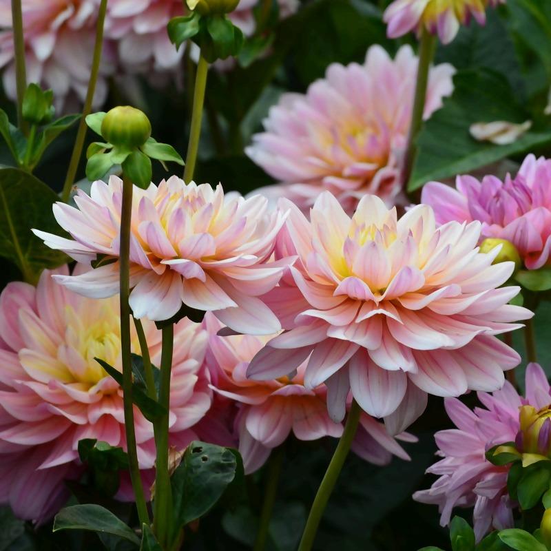 flowers-5124205_1920_1.jpg