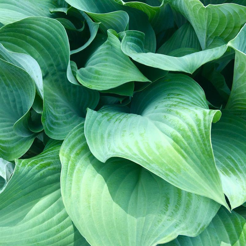 green-2384954_1920.jpg