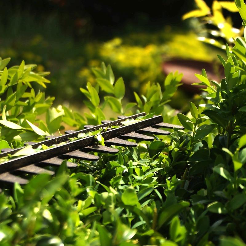 hedge-3393849_1920_2.jpg