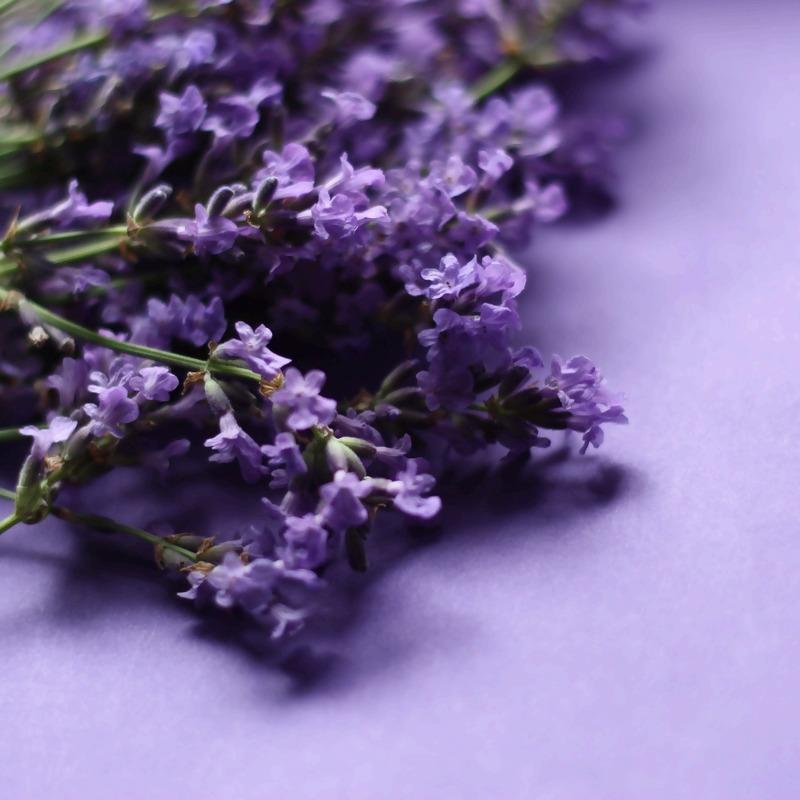 lavender-1491614_1920.jpg