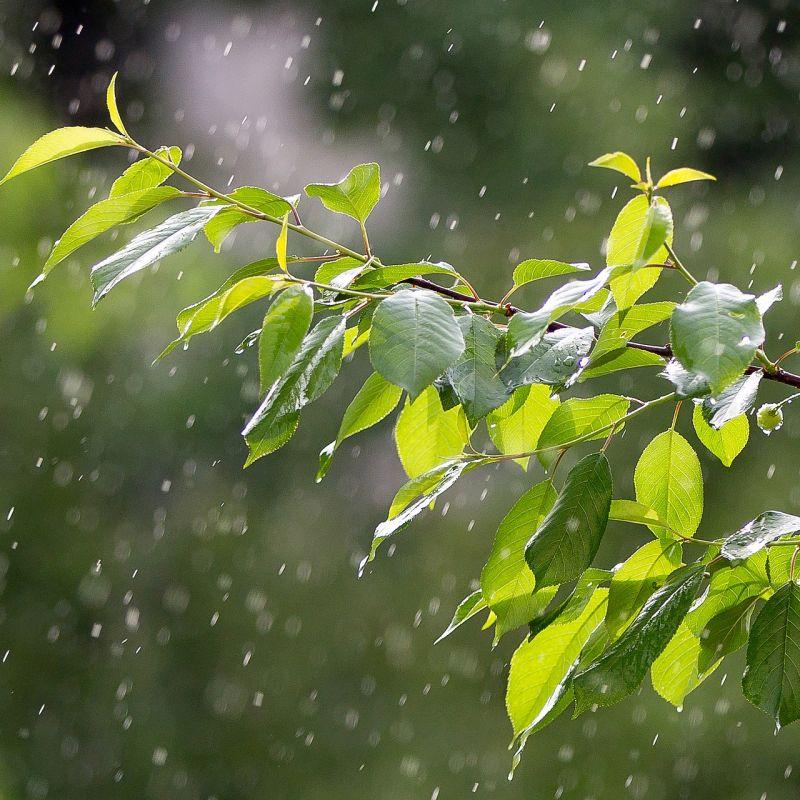rain-3411970_1920.jpg