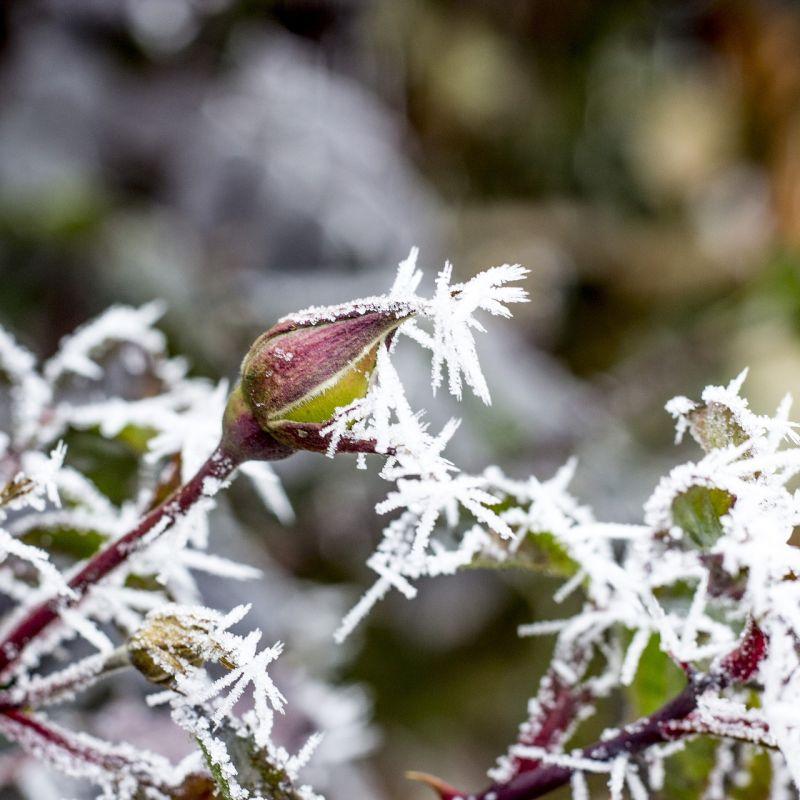 winter-2092216_1920.jpg