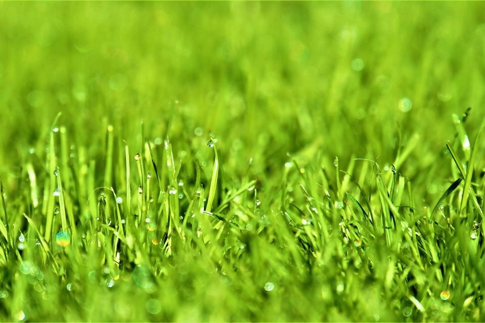 Rasen.jpg