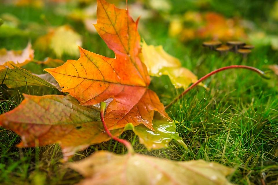 autumn-5672598_1920.jpg