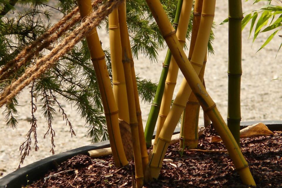 bamboo-5064_1920.jpg