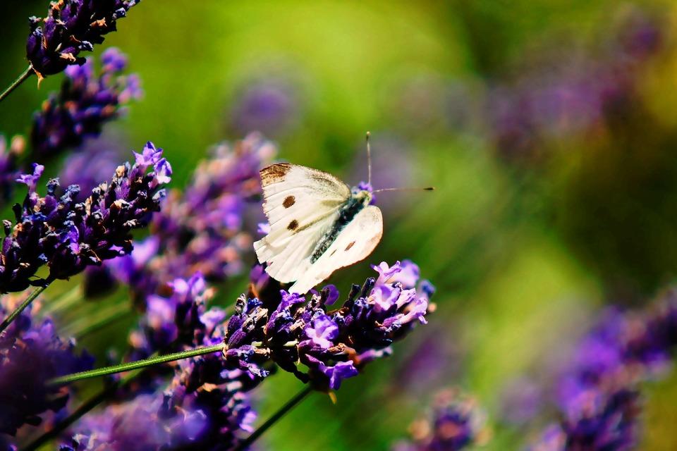 butterfly-3529960_1920.jpg