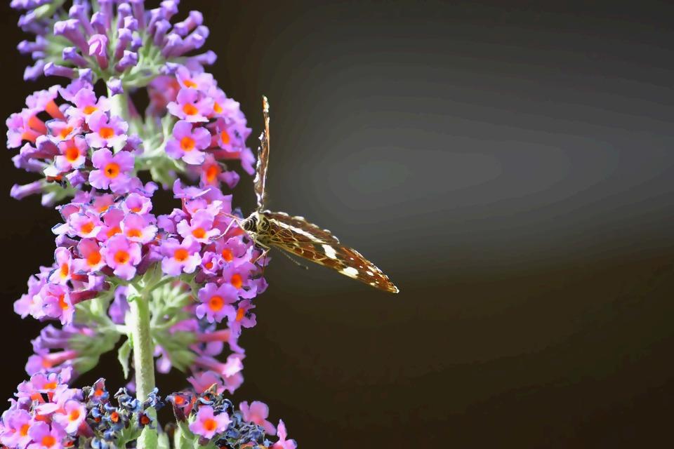 butterfly-5761560_1920.jpg