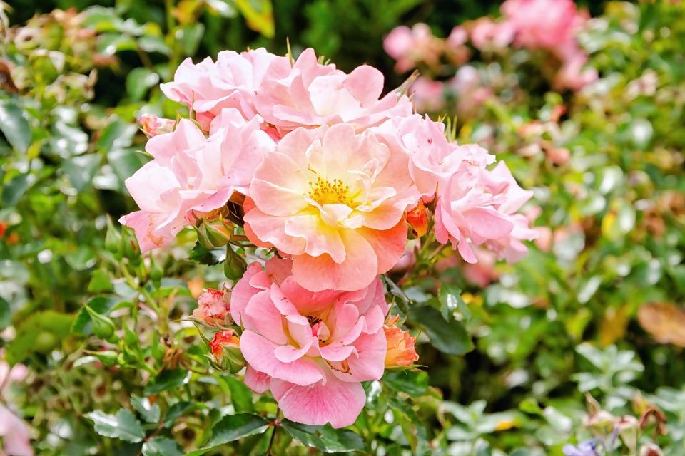 flower-3060309_1920.jpg