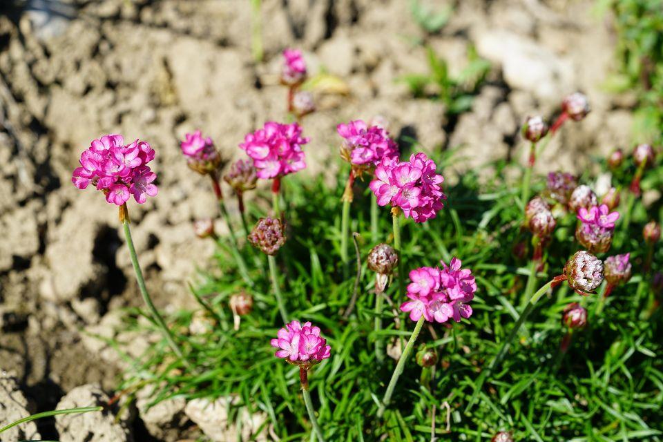 flower-3164004_1920.jpg