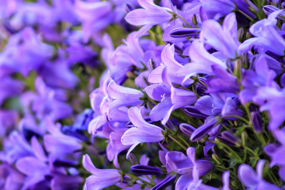 flower-4211521_1920.jpg