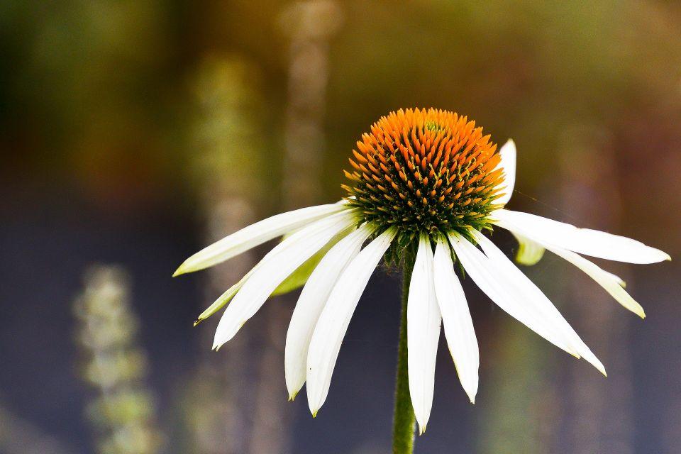 flower-5363626_1920.jpg