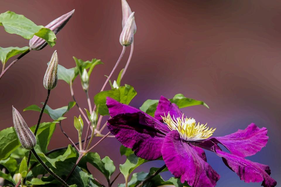 flower-807073_1920.jpg