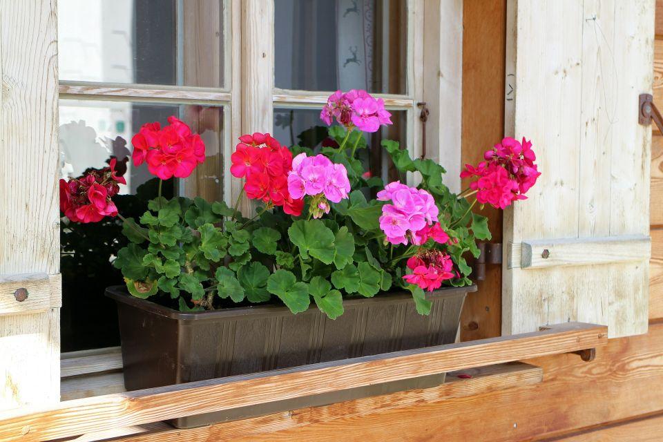 flower-box-466049_1920.jpg