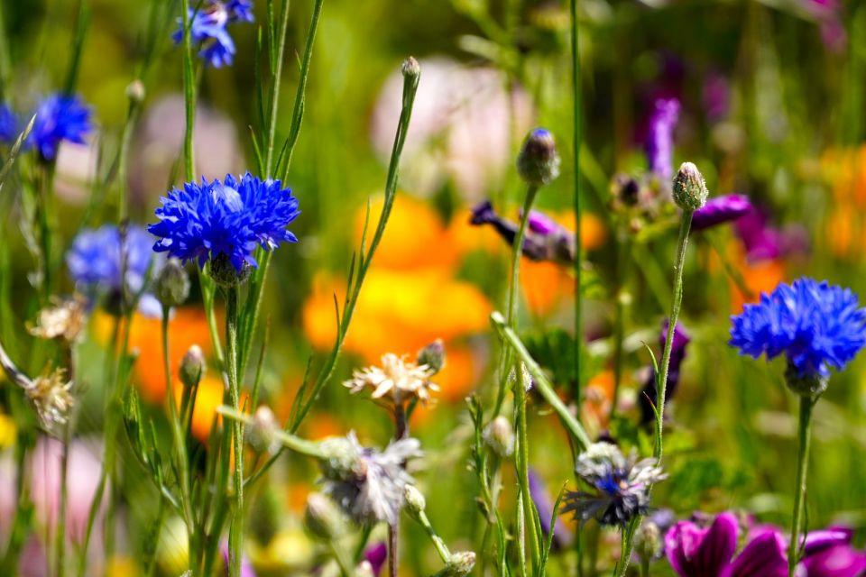 flower-meadow-5257573_1920.jpg