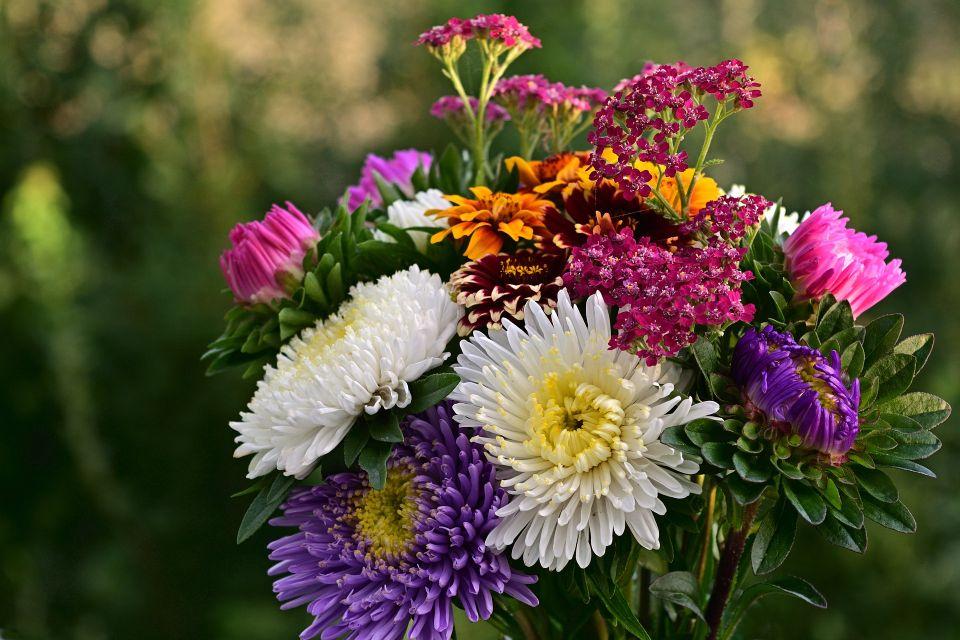 flowers-4415515_1920.jpg
