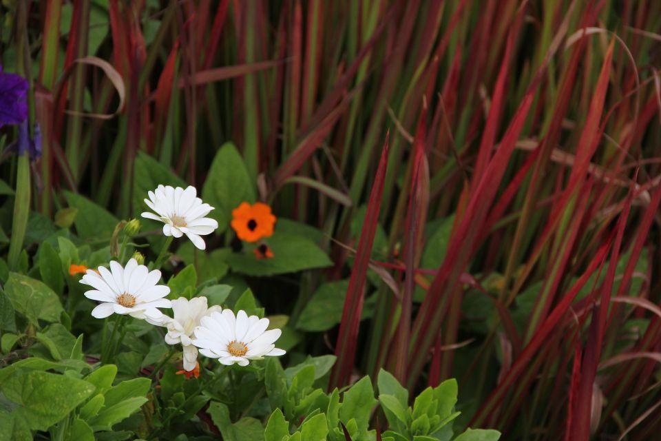 flowers-4517665_1920.jpg