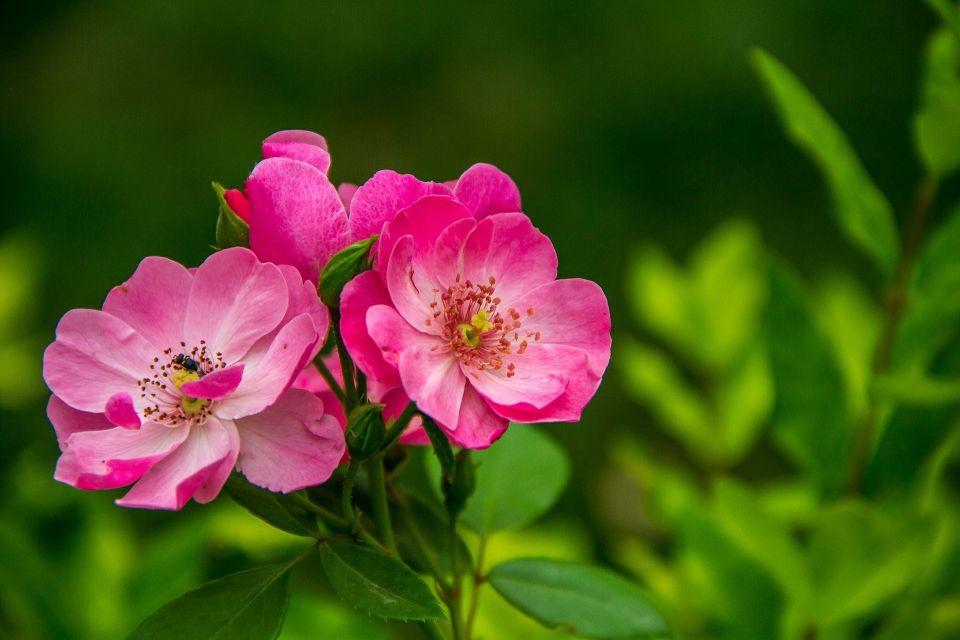flowers-526543_1920.jpg