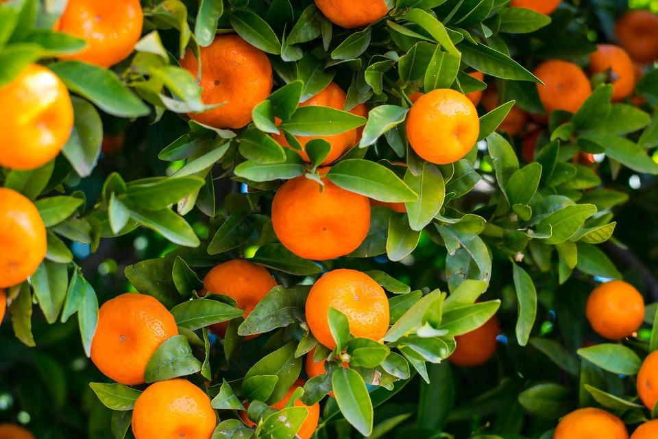 fruit-3175021_1920.jpg