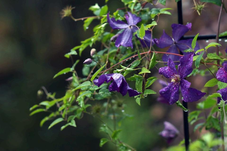 garden-3689114_1920.jpg