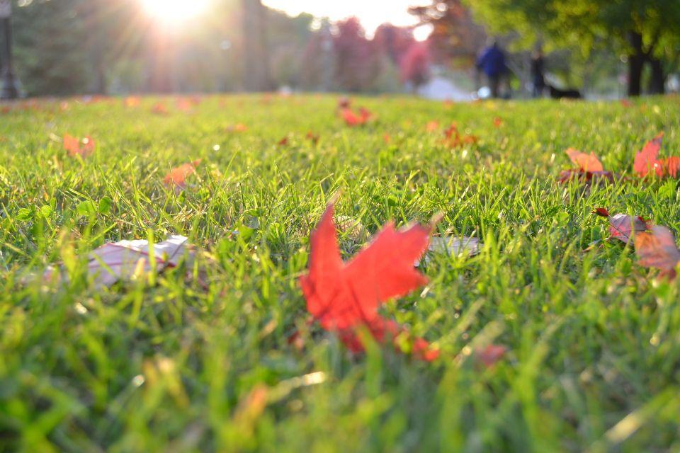 grass-1281561_1920.jpg
