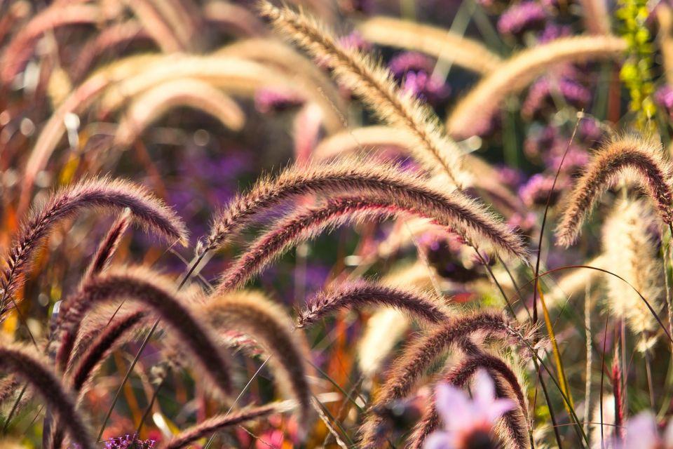 grasses-3784403_1920.jpg