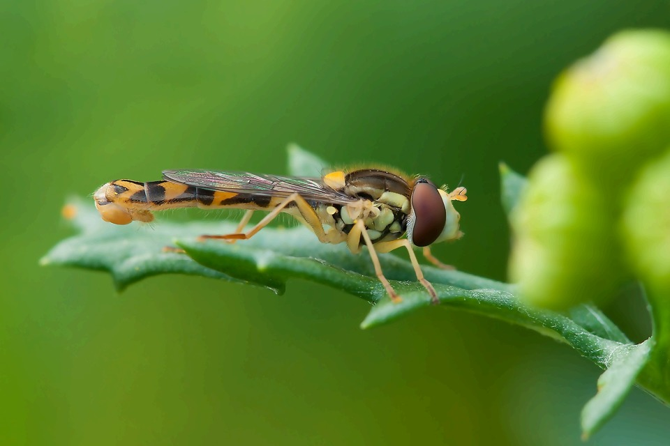 insect-212940_1920.jpg