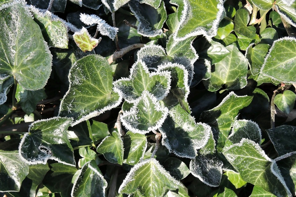 kategorie-kletterpflanzen-winter.jpg