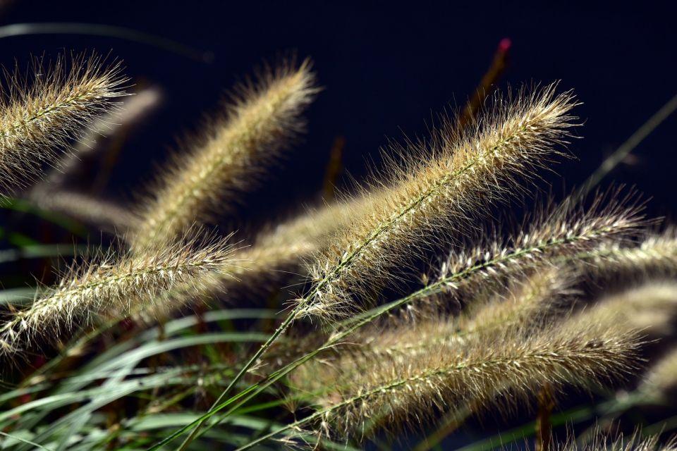 lamp-cleaning-er-grass-3712358_1920.jpg