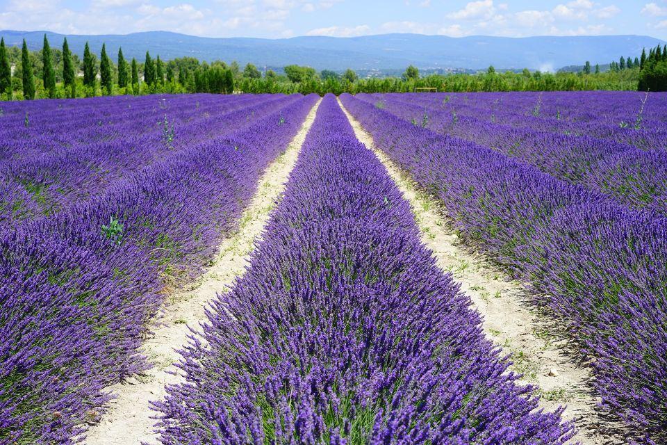 lavender-field-1595577_1920.jpg