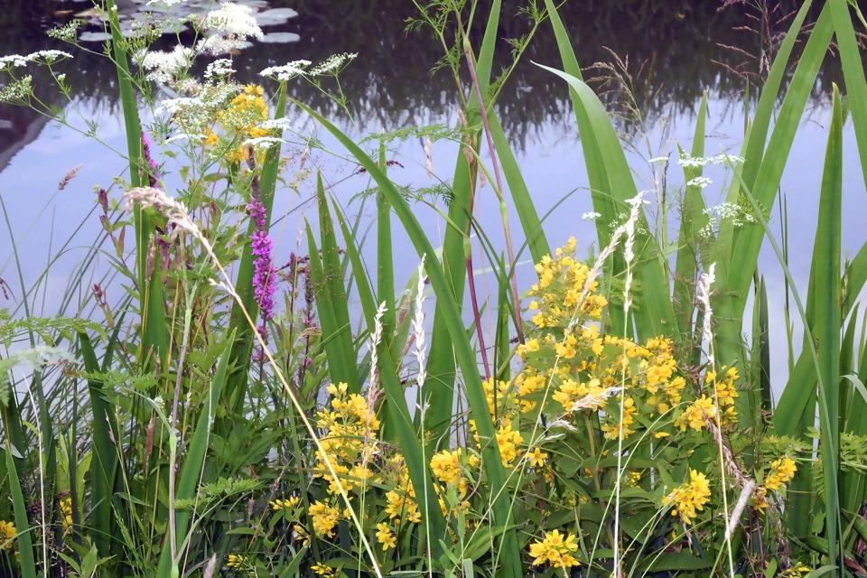 marsh-plants-3524759_1920.jpg