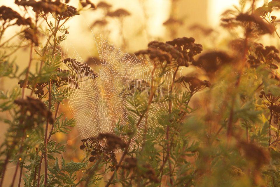 morning-mist-4497877_1920.jpg