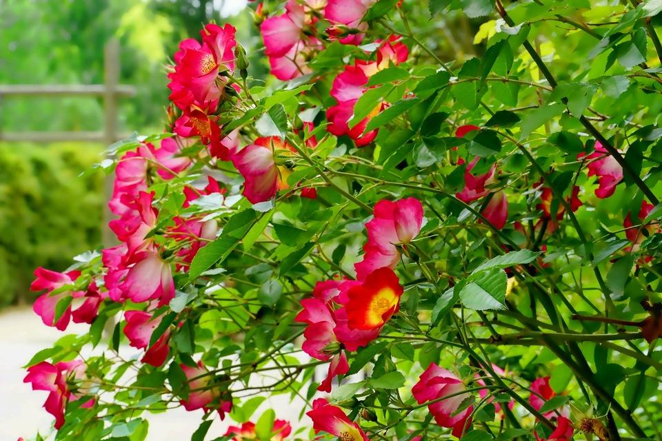 plant-3391981_1920.jpg