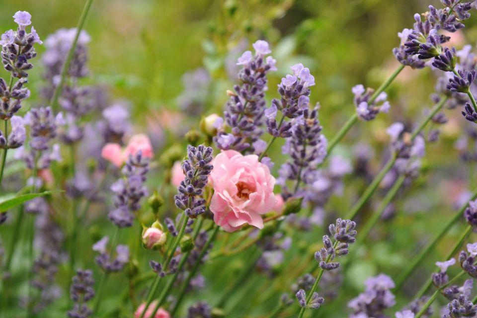 rose-1545188_1920.jpg