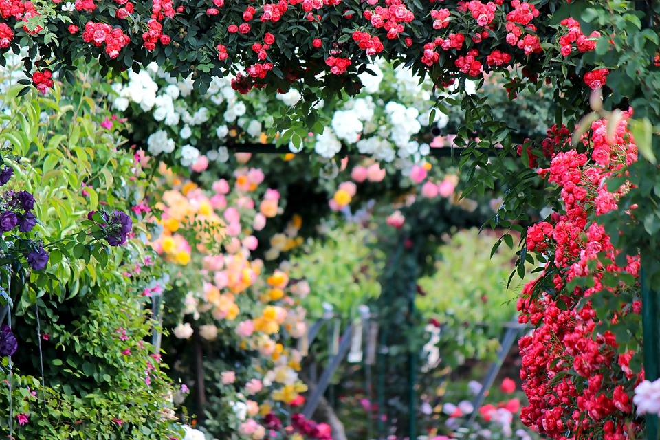 rose-2721846_1920_1.jpg