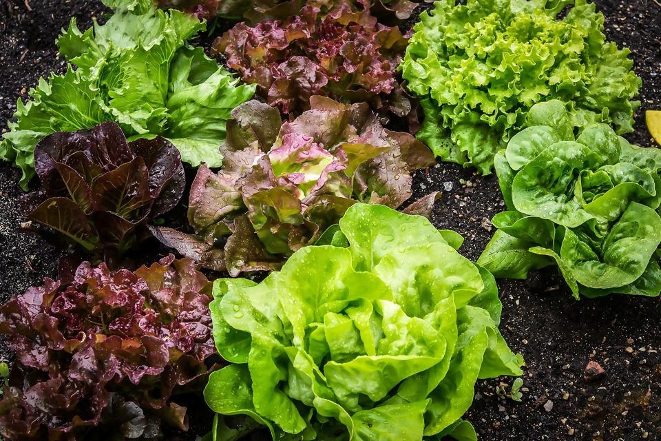 salad-2376777_1920.jpg