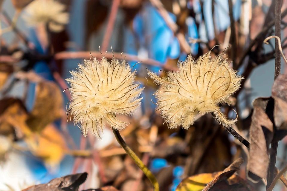 seeds-was-3838068_1920.jpg