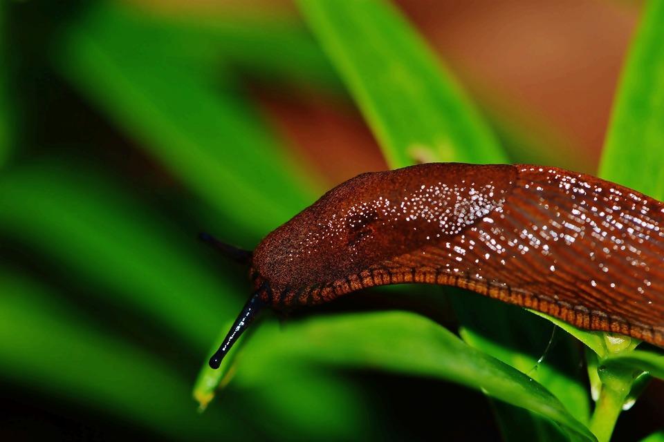snail-1441137_1920.jpg