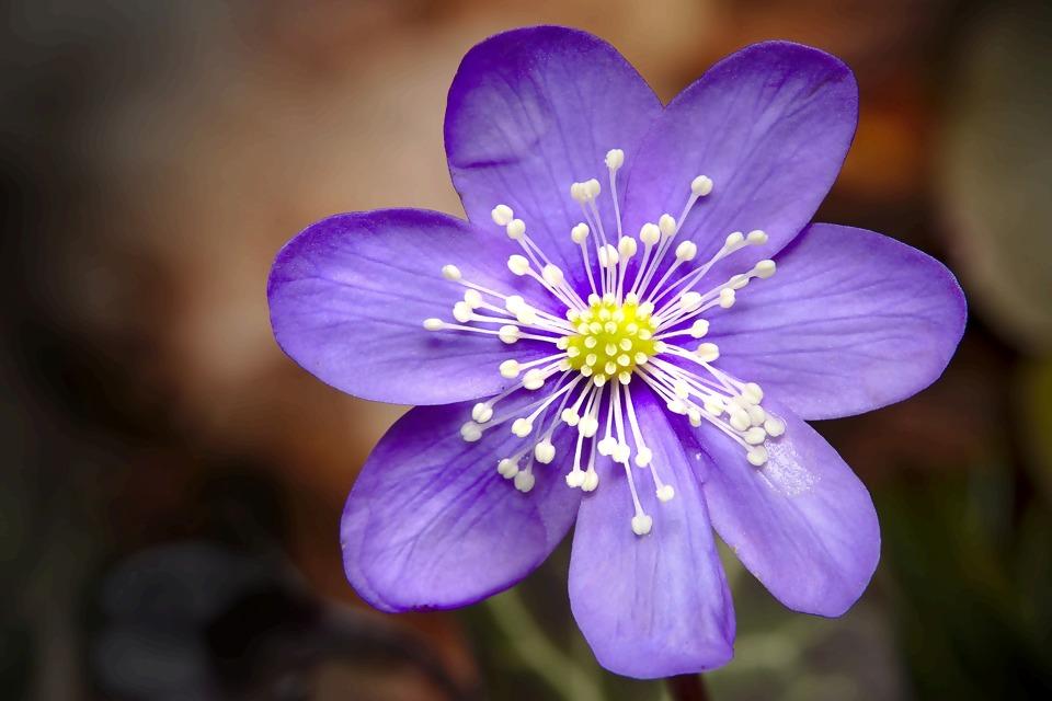 spring-4892904_1920.jpg