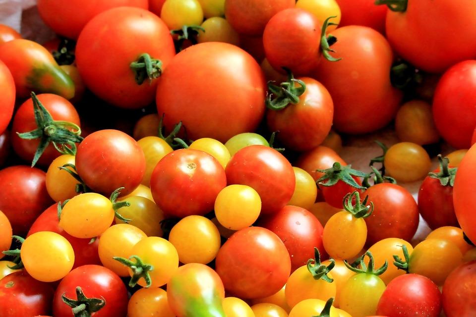 tomatoes-1569280_1920.jpg