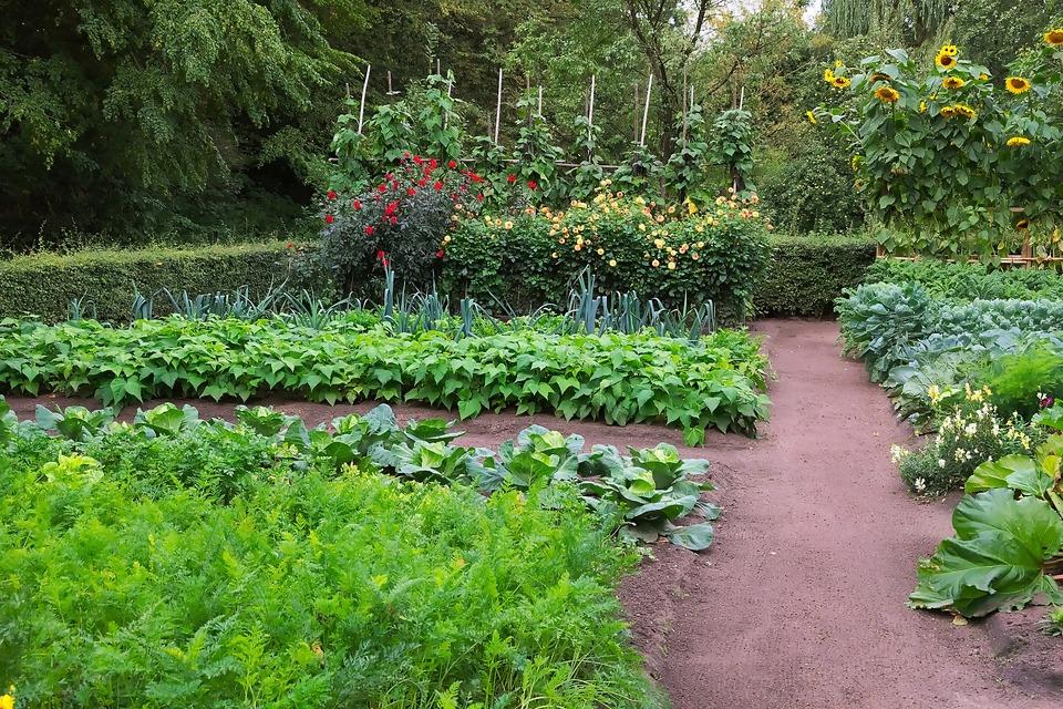 vegetable-garden-4518951_1920.jpg