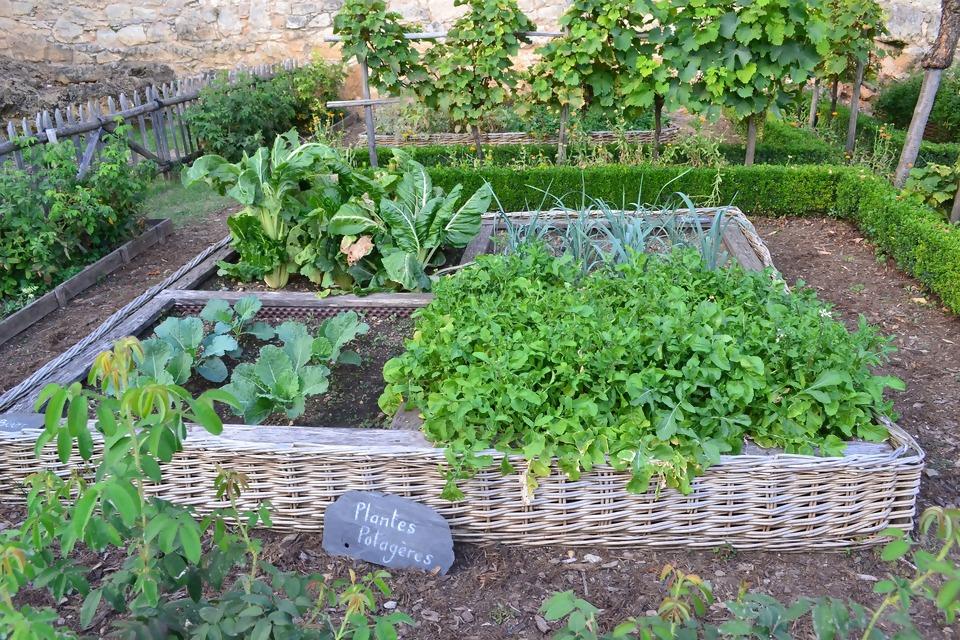 vegetable-garden-890625_1920.jpg