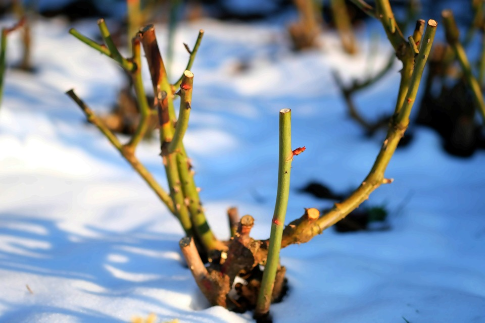 winter-3369980_1920.jpg