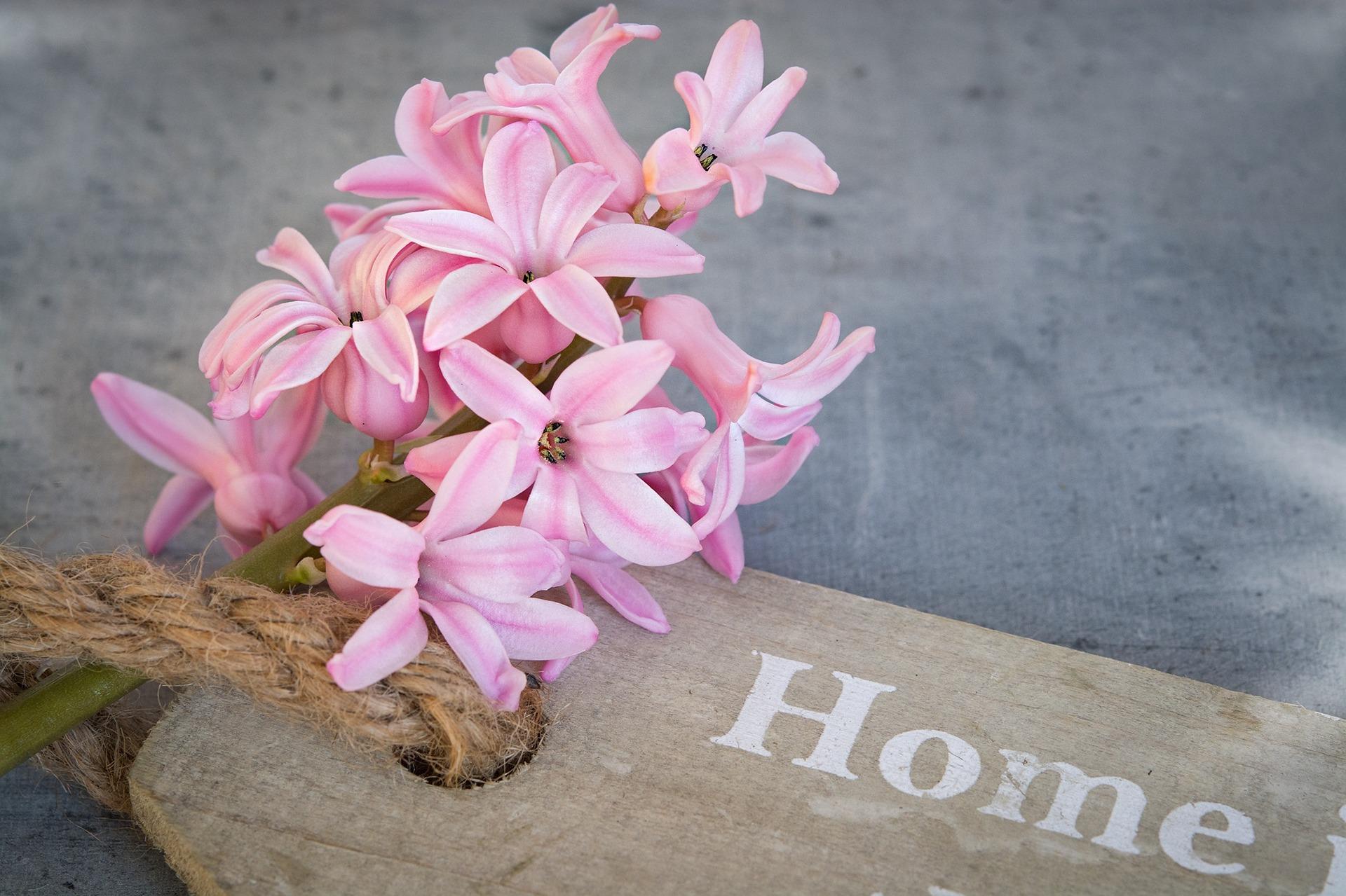 Hyazinthe auf Holzschild mit Aufschrift Home
