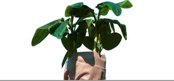 Winterschutz Pflanzen