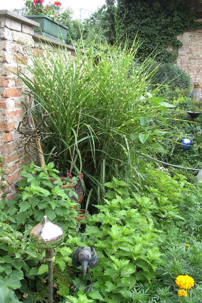Gräser Für Garten ziergräser gärtner pötschke