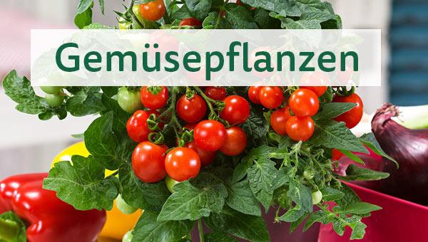 Pflanzenlexikon