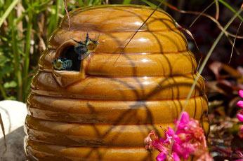 Bienenbufett