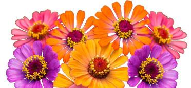 Blumensamen