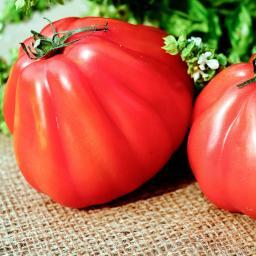 Tomatenpflanze Corazon F1, veredelt, im ca. 10,5 cm-Topf