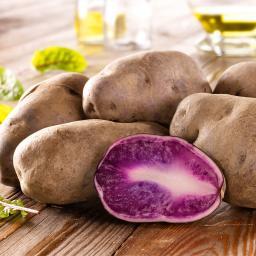 Kartoffel Blue Congo, 5 Stück